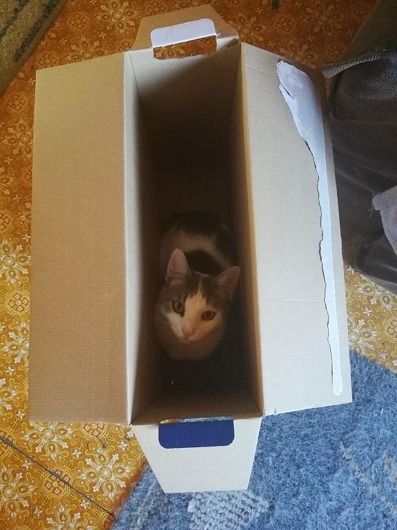 cica boldogság, macska egészség, cica játék, macska, cica, cicacsalád