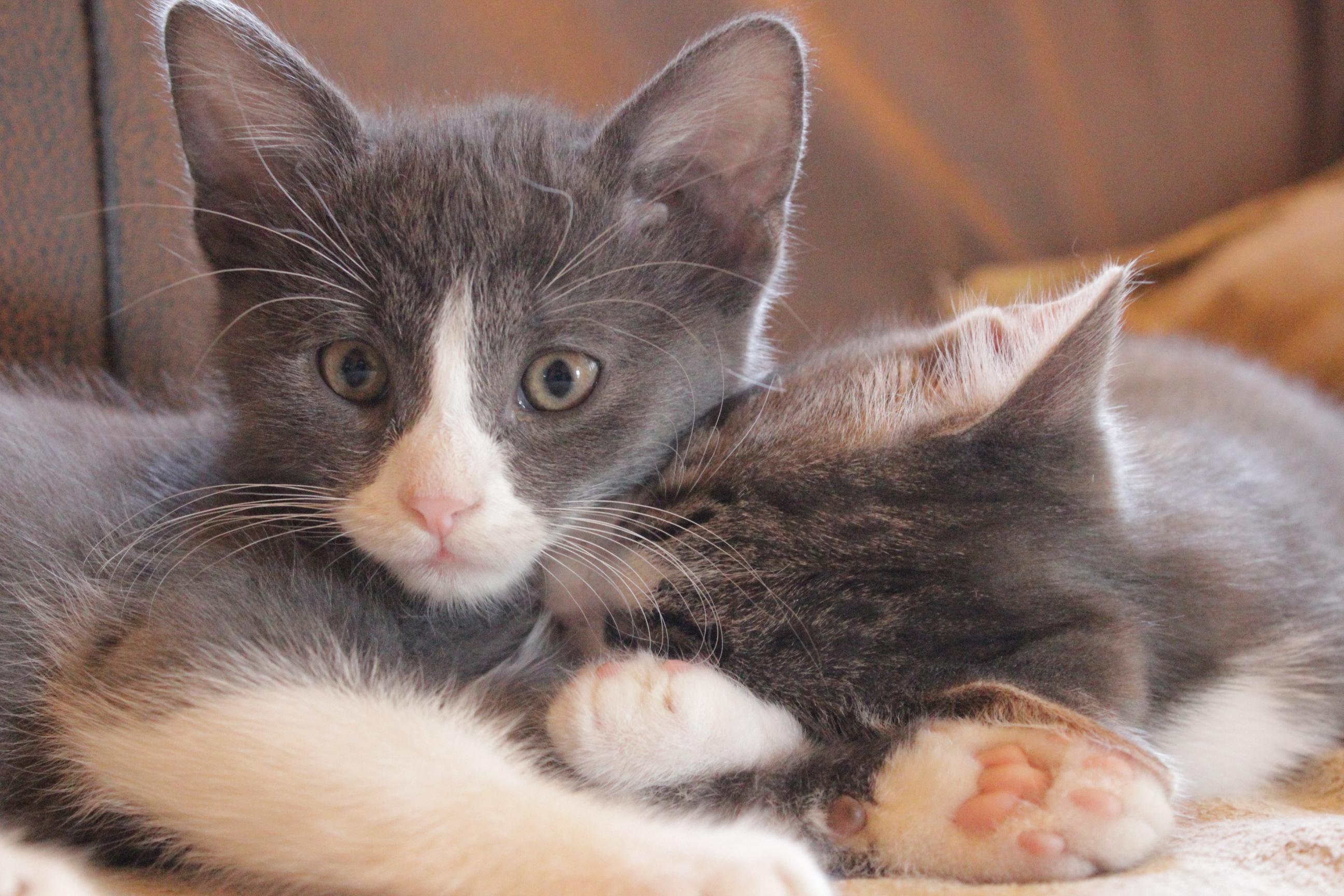 kis cicák, macskás ajándékok